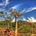Odd Trees by Armando Perez