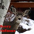 Oh Deer Merry Christmas by DeeLon Merritt