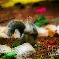 Oh I Ate To Many  Nuts by Peggy Franz