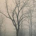 Ohio Winter Solitude by Pamela Baker