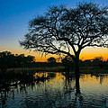 Okavango by Andy Bitterer