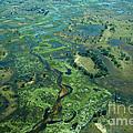 Okavango Delta 3 by Mareko Marciniak