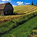 Old Barn In A Field by Steve Nagy