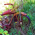 Old Bike And Weeds by Duane McCullough