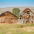 Old Building Woodruff Utah by Donna Greene