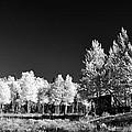 Old Cabin In The Aspen by Ellen Heaverlo