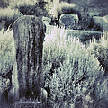 Old Cemetery On A Hill by Jill Battaglia