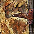 Old Door Hinge by Perry Webster