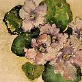 Old-fashioned African Violets by Beverley Harper Tinsley