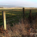 Old Fence And Landscape At Point Reyes California . 7d9968 by Wingsdomain Art and Photography