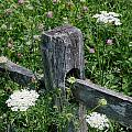 Old Fence And Wildflowers by Mike Nellums