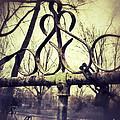 Old Fence Detail by Jill Battaglia