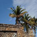 Old Florida by Barbara McMahon
