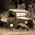 Old Gold by Steve McKinzie