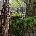 Old Jamaican Sugar Mill by Carol  Bradley