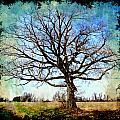 Old Oak Tree by Debbie Portwood