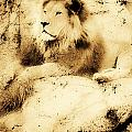 Old Photograph Of A Lion On A Rock by Chris Knorr