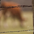 Old Post Fence by Kim Henderson