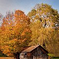 Old Shed by Cindy Haggerty