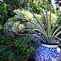 Old Town Potted Cactus by Anne Raczkowski