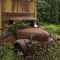 Old Truck In Rain Forest  by Gary Langley