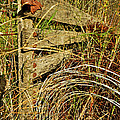 Old Weathered Gate by Debbie Portwood