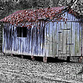 Old Weathered Shed by Betty LaRue