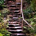 Old Wet Stone Steps by Henrik Lehnerer