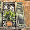Old Window And A Green Plant by Mats Silvan