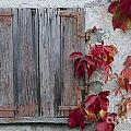 Old Window With Red Leaves by Mats Silvan