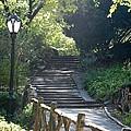 Oldbridge Steps by Rob Hans