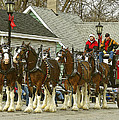 Olde Tyme Travel Clydesdales by Jenny Gandert
