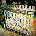 Ole Garden Gate I by Sheri McLeroy