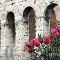 Oleander And Colosseum by Mike Nellums