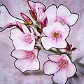 Oleander Blossoms by Jim Painter