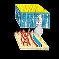 Olfactory Epithelium, Artwork by Francis Leroy, Biocosmos