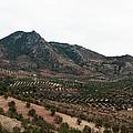 Olive Oil Mountain by Lorraine Devon Wilke