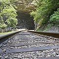 On The Tracks by Betsy Knapp