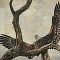 On Wings High by Deborah Benoit