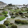 Ona Beach 2 by Linda Hutchins