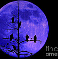 Once In A Blue Moon  by Ken Frischkorn