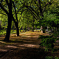 One Day In The City Park by Edgar Laureano