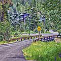 One Lane Bridge - Vail by Madeline Ellis