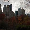One Light On In Central Park by Lorraine Devon Wilke