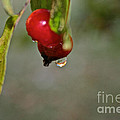 One More Drip by Susan Herber