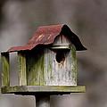 One Room Shack - Bird House by Travis Truelove