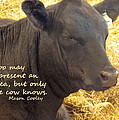 Only Cows Know by Ian  MacDonald