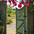 Open Garden Gate With Roses by Elena Elisseeva