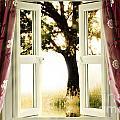 Open Window To Tree by Simon Bratt Photography LRPS