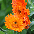 Orange And Green  by Suzanne Gaff